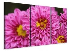 Leinwandbild 3-teilig Chrysanthemen
