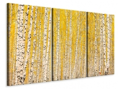 Leinwandbild 3-teilig Der Birkenwald im Herbst