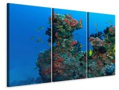 Leinwandbild 3-teilig Die Welt der Fische