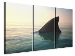 Leinwandbild 3-teilig Haifischflosse