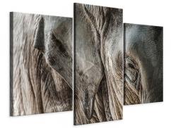 Leinwandbild 3-teilig modern Close Up Elefant