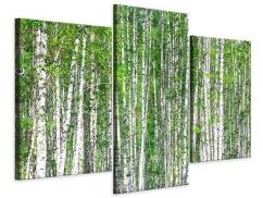 Leinwandbild 3-teilig modern Der Birkenwald