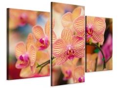 Leinwandbild 3-teilig modern Exotische Orchideen