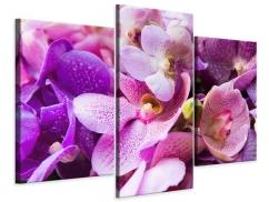 Leinwandbild 3-teilig modern Im Orchideenparadies