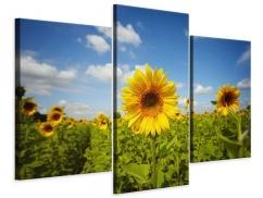 Leinwandbild 3-teilig modern Sommer-Sonnenblumen
