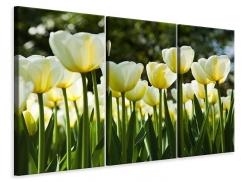 Leinwandbild 3-teilig Tulpen bei Sonnenuntergang