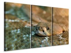 Leinwandbild 3-teilig Viper