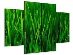 Leinwandbild 4-teilig Gras mit Morgentau