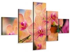 Leinwandbild 5-teilig Exotische Orchideen