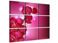 Leinwandbild 9-teilig Orchideenmärchen