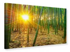 Leinwandbild Bambusse