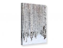 Leinwandbild Der Birkenwald im Winter