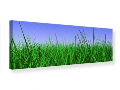 Leinwandbild Panorama Im Gras