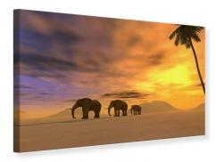 Leinwandbild Wüstenelefanten