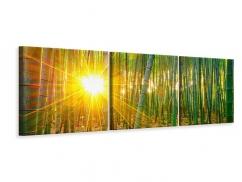 Panorama Leinwandbild 3-teilig Bambusse