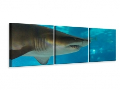 Panorama Leinwandbild 3-teilig Der Haifisch