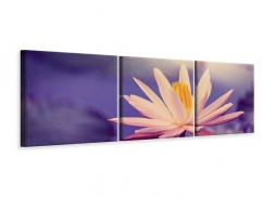 Panorama Leinwandbild 3-teilig Lotus bei Sonnenuntergang