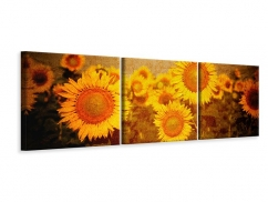 Panorama Leinwandbild 3-teilig Retro-Sonnenblumen
