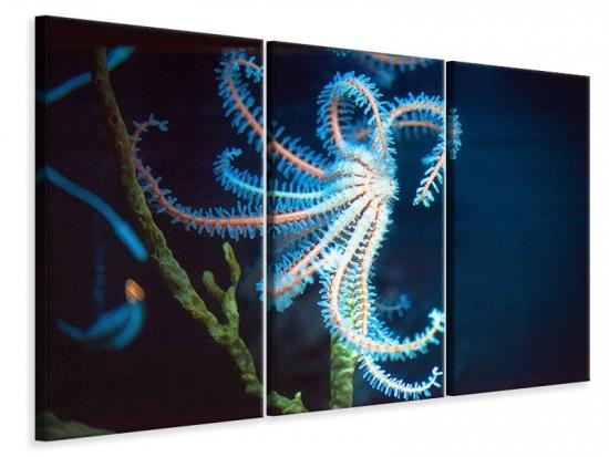 Leinwandbild 3-teilig Aquarium