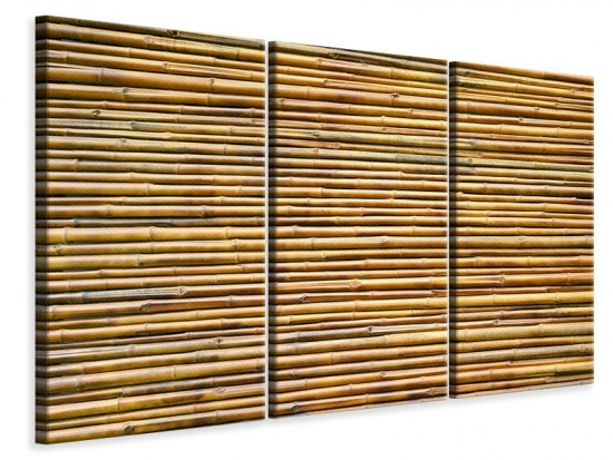 Leinwandbild 3-teilig Bambus