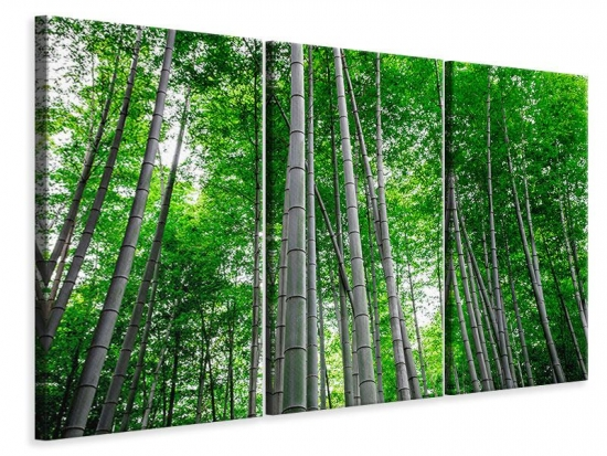 Leinwandbild 3-teilig Bambuswald