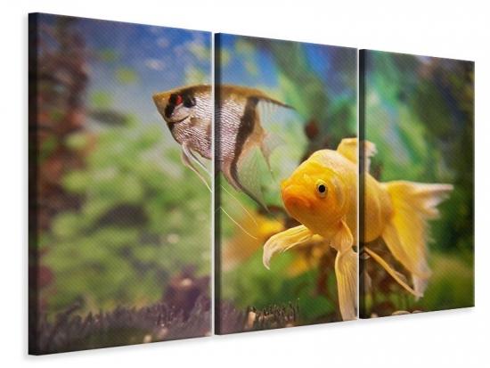 Leinwandbild 3-teilig Bunte Fische