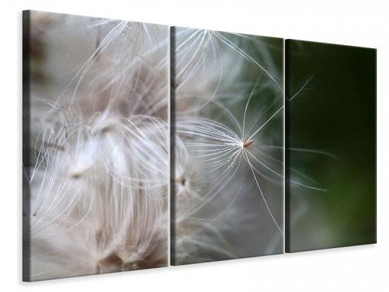 Leinwandbild 3-teilig Close up Blütenfasern