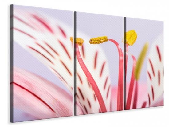 Leinwandbild 3-teilig Close Up Die exotische Schönheit