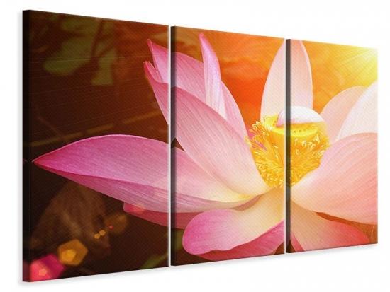 Leinwandbild 3-teilig Close Up Lotus