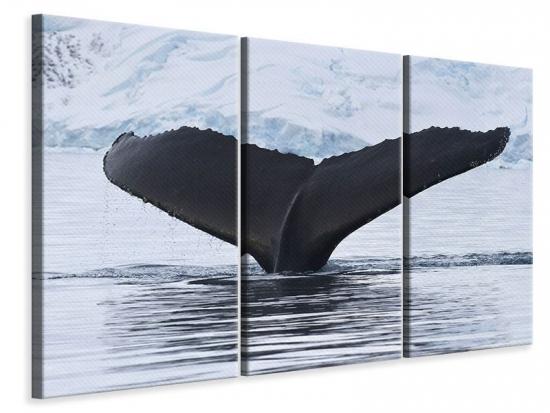 Leinwandbild 3-teilig Der Buckelwal