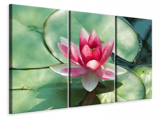 Leinwandbild 3-teilig Der Frosch und das Lotusblatt
