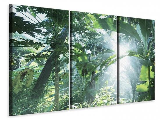 Leinwandbild 3-teilig Dschungelstar