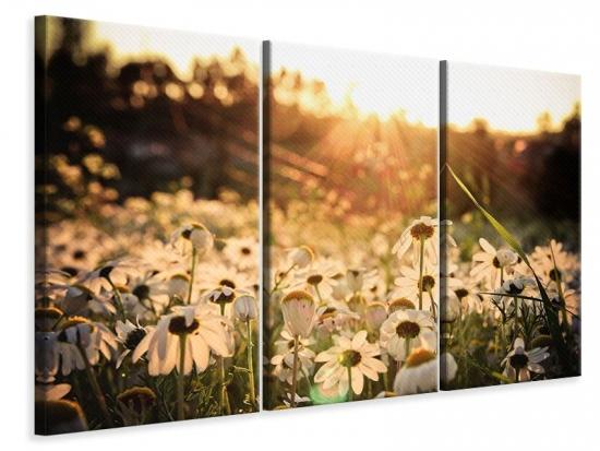 Leinwandbild 3-teilig Gänseblümchen bei Sonnenuntergang