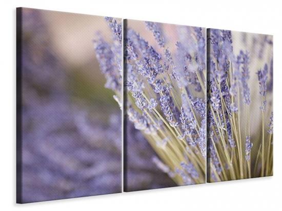 Leinwandbild 3-teilig Lavendel XXL