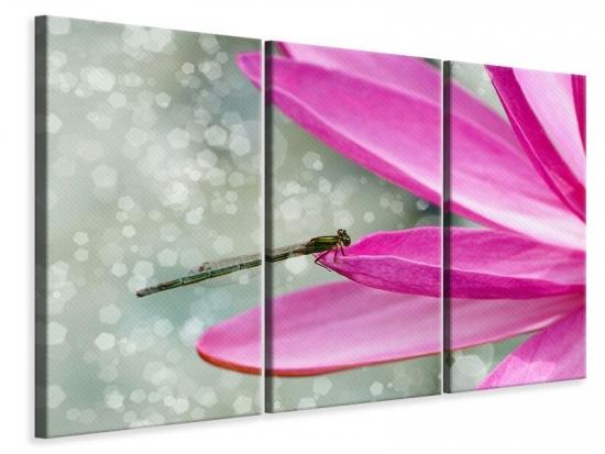 Leinwandbild 3-teilig Libelle auf dem Seerosenblatt