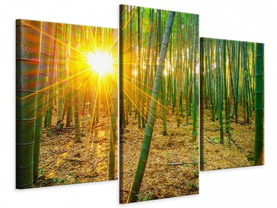 Leinwandbild 3-teilig modern Bambusse