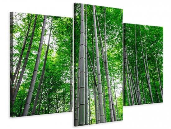 Leinwandbild 3-teilig modern Bambuswald