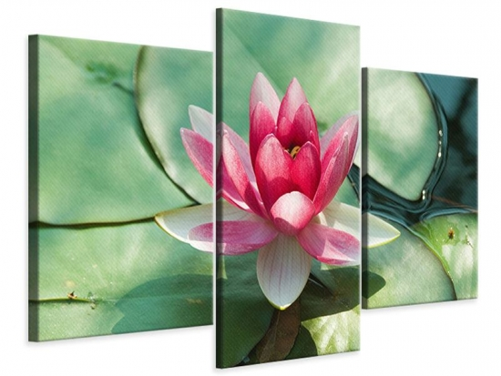 Leinwandbild 3-teilig modern Der Frosch und das Lotusblatt