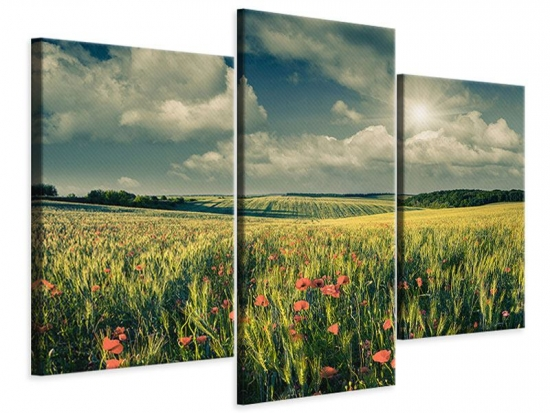 Leinwandbild 3-teilig modern Der Mohn im Weizenfeld