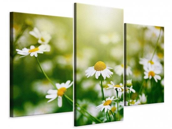 Leinwandbild 3-teilig modern Die Gänseblümchen