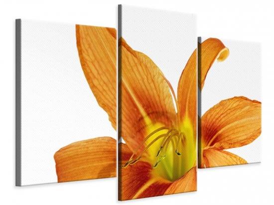 Leinwandbild 3-teilig modern Die Tiger-Lilie