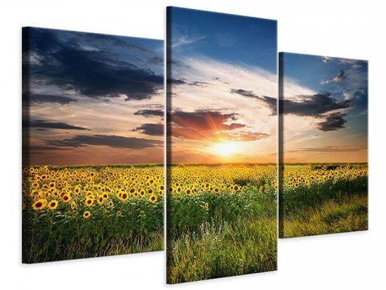 Leinwandbild 3-teilig modern Ein Feld von Sonnenblumen