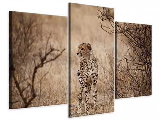 Leinwandbild 3-teilig modern Eleganter Gepard