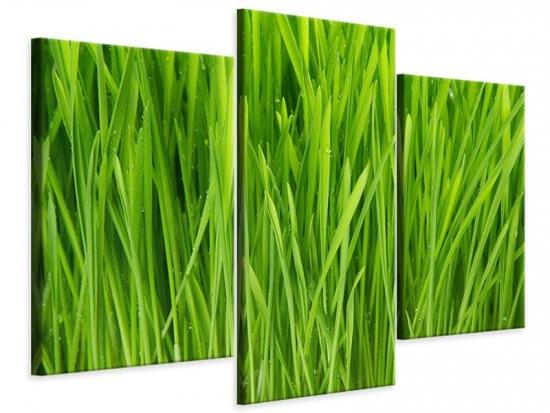 Leinwandbild 3-teilig modern Grashalme im Morgentau
