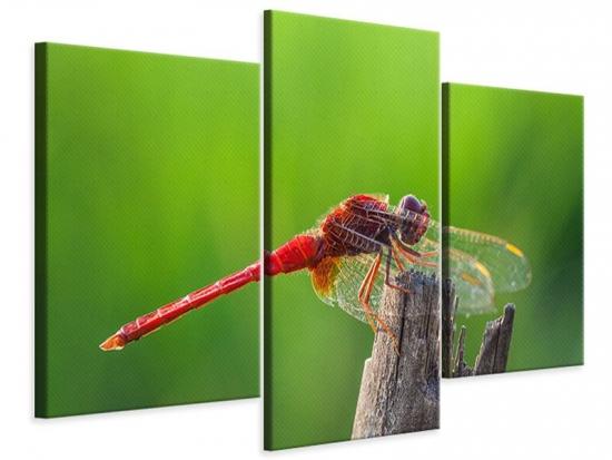 Leinwandbild 3-teilig modern Libelle XXL