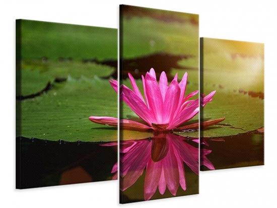 Leinwandbild 3-teilig modern Lotus im Wasser