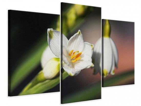 Leinwandbild 3-teilig modern Schneeglöckchen XXL