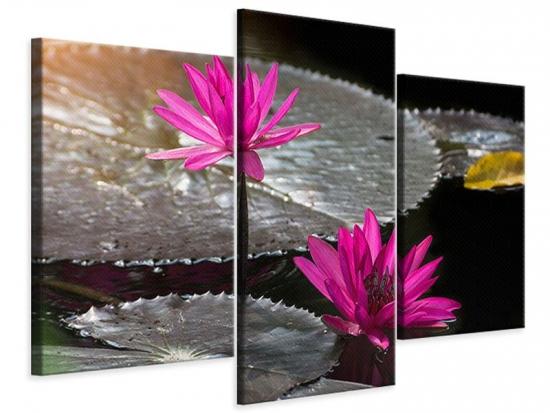 Leinwandbild 3-teilig modern Seerosen im Morgentau