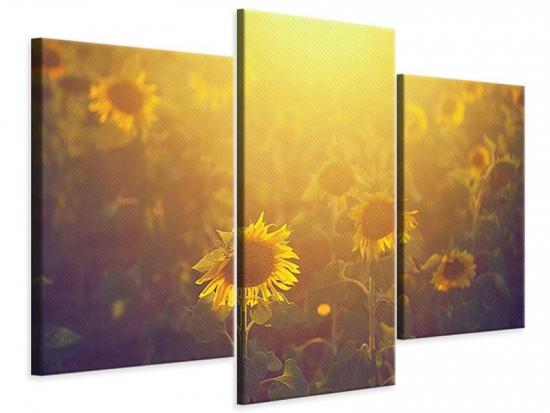 Leinwandbild 3-teilig modern Sonnenblumen im goldenen Licht