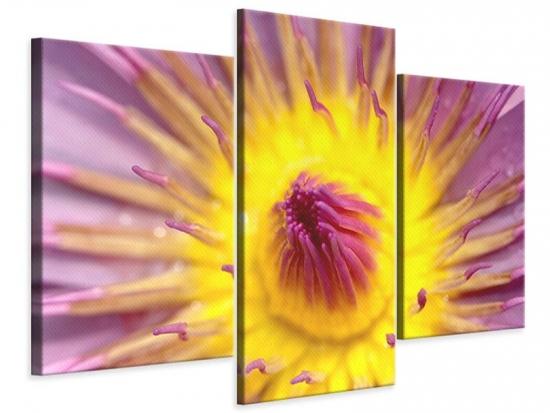 Leinwandbild 3-teilig modern XXL-Lotus